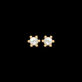 Guld ørestikker i 14 karat guld med 4 mm ferskvandsperle 70242854